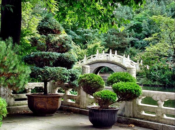 Хвойные растения и целебные травы