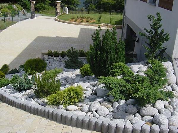 Хвойные растения на садовом участке